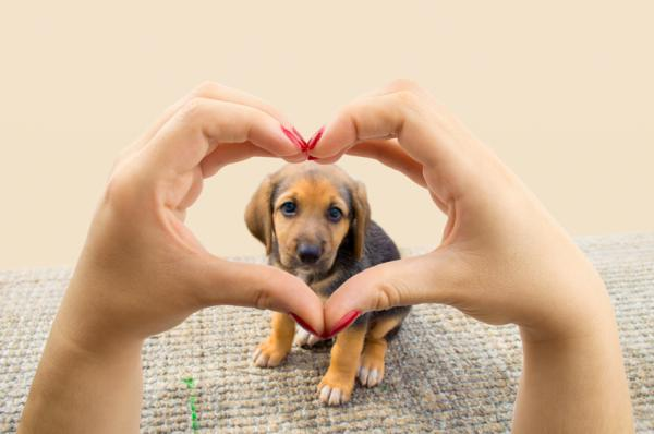 50 Frases Criativas E Impactantes De Cachorros